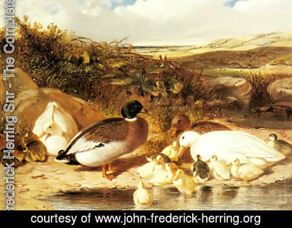 John Frederick Herring Snr - Mallard Ducks and Ducklings on a River Bank