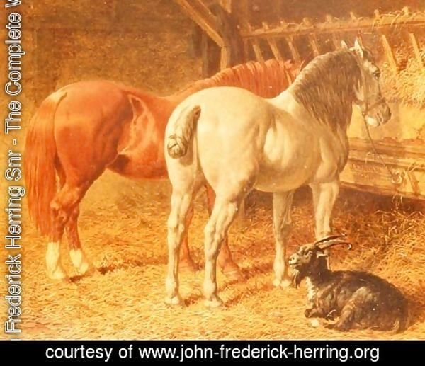 John Frederick Herring Snr - Horses and a goat in a stable