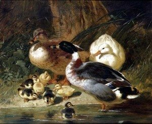 John Frederick Herring Snr - Ducks and Ducklings