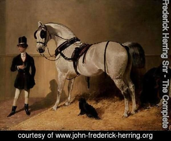 John Frederick Herring Snr - A St. James's Carriage Horse