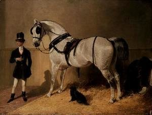 A St. James's Carriage Horse
