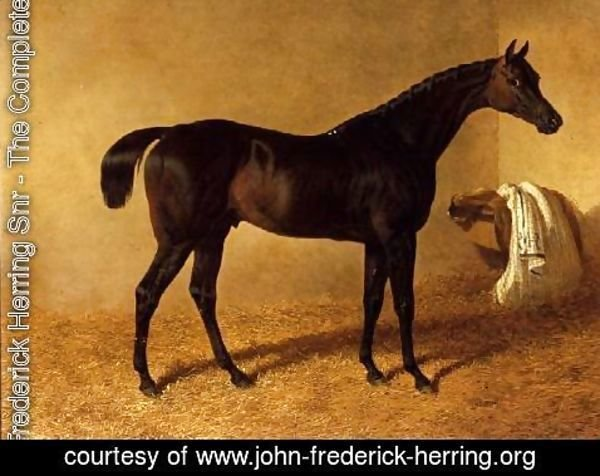 John Frederick Herring Snr - 'Dr Syntax', a dark bay racehorse in a loose box