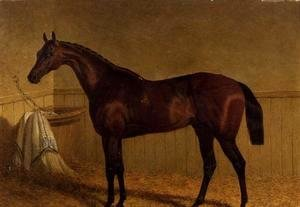 John Frederick Herring Snr - 'Beeswing', a bay racehorse in a loosebox