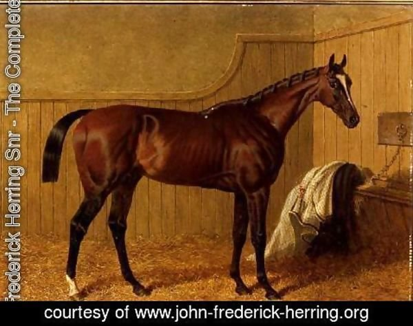 John Frederick Herring Snr - 'Touchstone', a bay racehorse in a loosebox