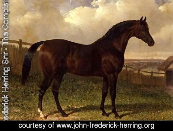 John Frederick Herring Snr - 'Emilius', a bay racehorse in a paddock