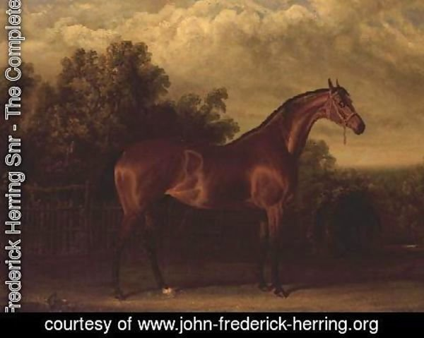 John Frederick Herring Snr - Negotiator' a Bay Colt in a Wooded landscape