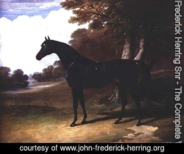 John Frederick Herring Snr - Gaucus, a dark bay horse in a wooded landscape