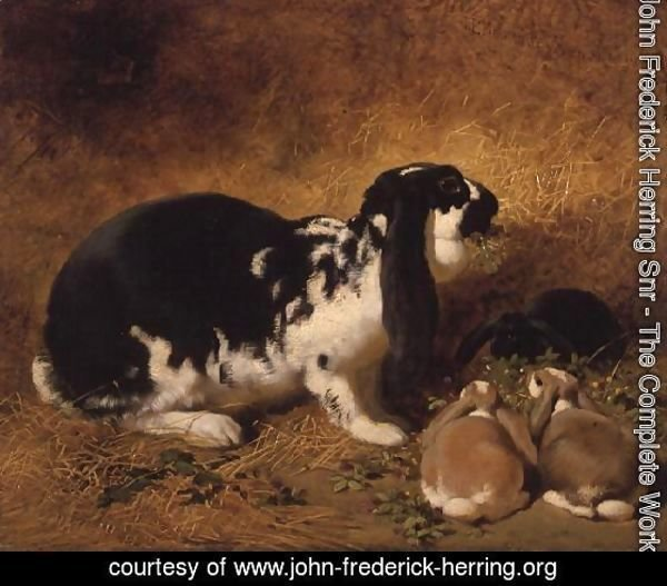 A Doe Rabbit and her three young, 1851