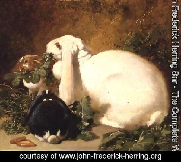 John Frederick Herring Snr - A Doe Rabbit and her two young, 1852