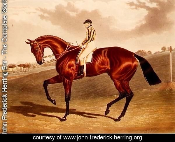 'Bay Middleton' winner of the Derby in 1836