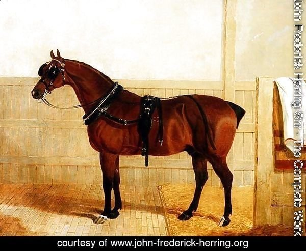 Prize Shire Horse in Harness, 1835