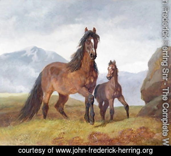 John Frederick Herring Snr - A Welsh Mountain Mare and Foal, 1854