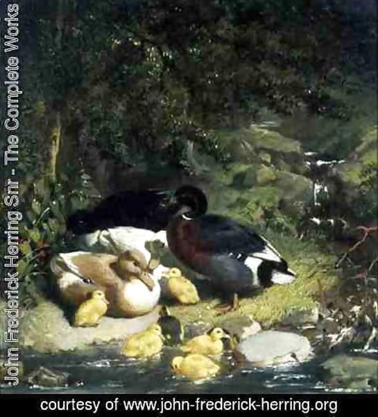 John Frederick Herring Snr - Ducks and Ducklings (2)