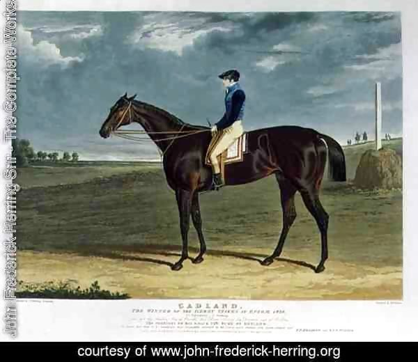'Cadland', the Winner of the Derby Stakes at Epsom, 1828