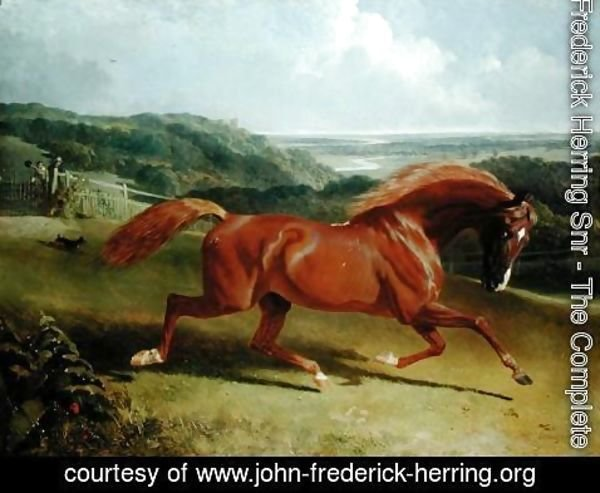 John Frederick Herring Snr - Galloping Horse in a Landscape