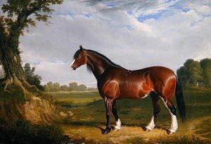 A Clydesdale Stallion, 1820