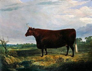 John Frederick Herring Snr - Portrait of a Brown Bull, 1831