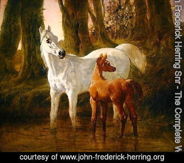 John Frederick Herring Snr - Mare and Foal startled while watering in a Stream, 1854