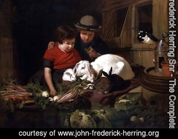 John Frederick Herring Snr - Rabbit Fanciers