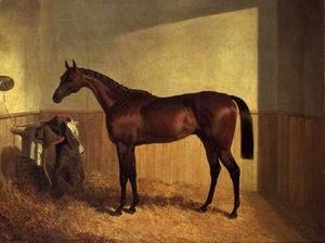 'The Merry Monarch', a bay racehorse, in a loosebox