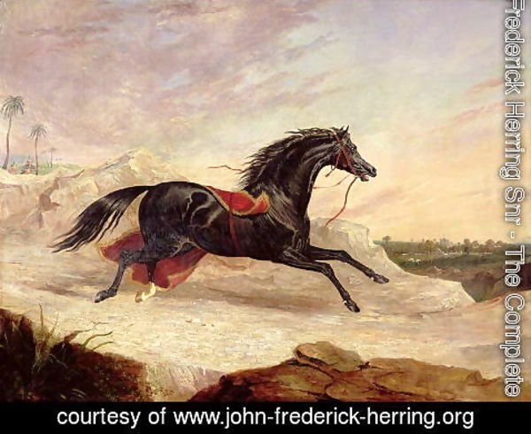 John Frederick Herring Snr - Arabs chasing a loose arab horse in an eastern landscape