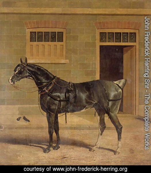 A Carriage Horse in a Stable Yard