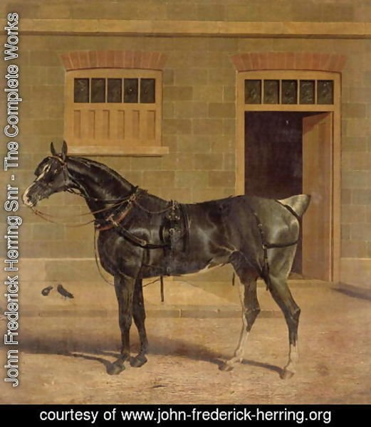 John Frederick Herring Snr - A Carriage Horse in a Stable Yard