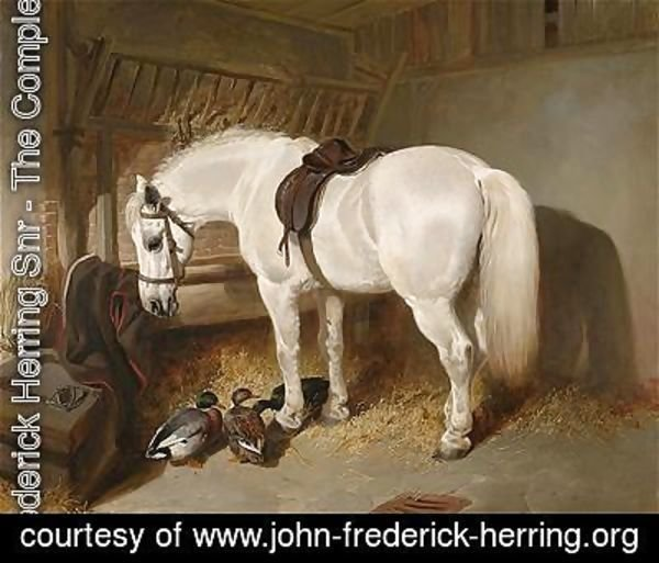 John Frederick Herring Snr - A grey pony in a stable with ducks