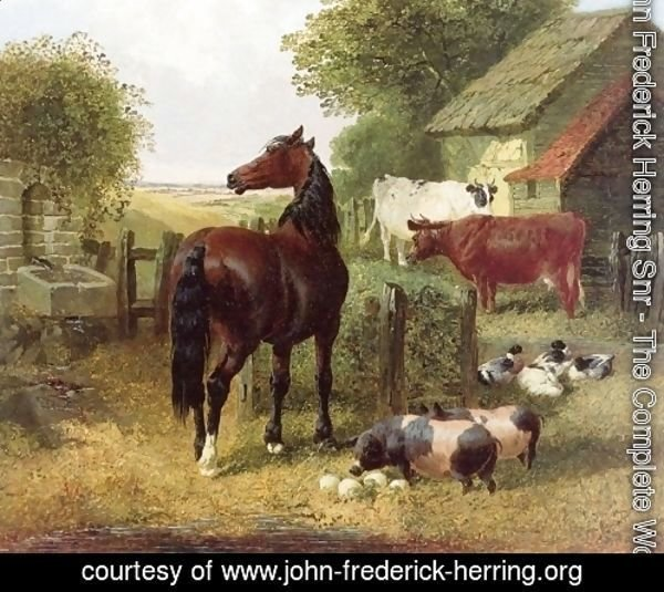 A Horse, Pigs, Cows and Ducks