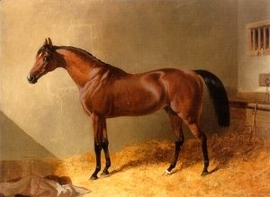 John Frederick Herring Snr - Bay Stallion in Stable