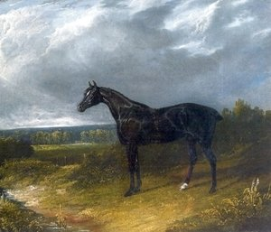 John Frederick Herring Snr - Black Stallion in a Field Horse