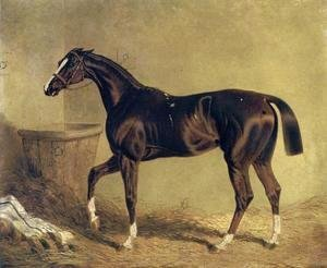 Camarine a Chestnut Racehorse in Stable