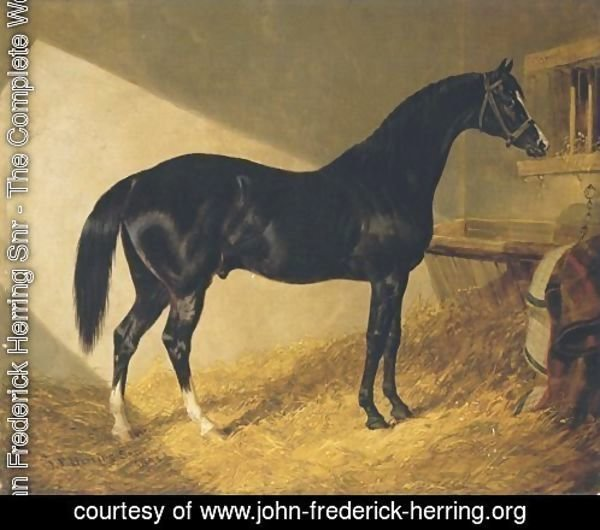 Camel Winner 1826 Port Stakes 1844