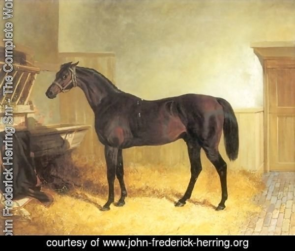 Charles XII a Brown Racehorse in a Stable