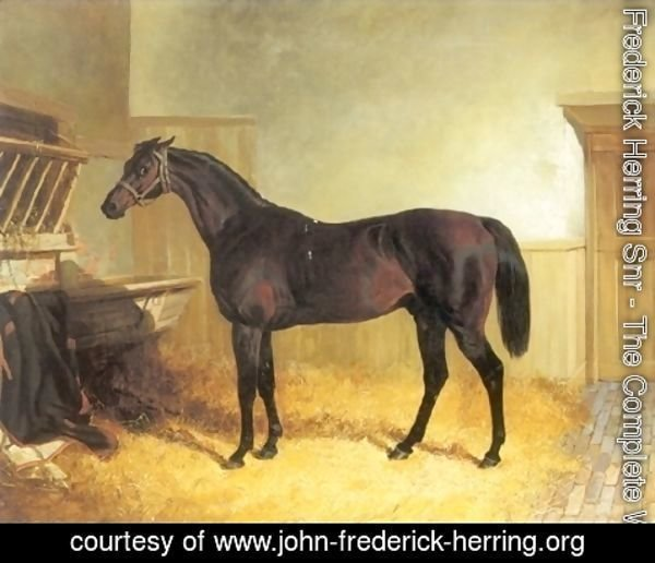 John Frederick Herring Snr - Charles XII a Brown Racehorse in a Stable