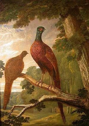 Cock and Hen Pheasant on a Roost