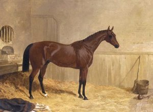 John Frederick Herring Snr - Cotherstone A Racehorse 1843