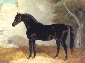 Dark Bay Racehorse in Courtyard