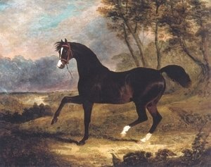 Dark Bay Racehorse in Landscape