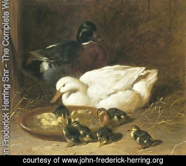 Duck And Duckings 1851