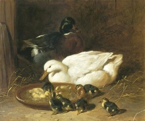 John Frederick Herring Snr - Duck And Duckings 1851