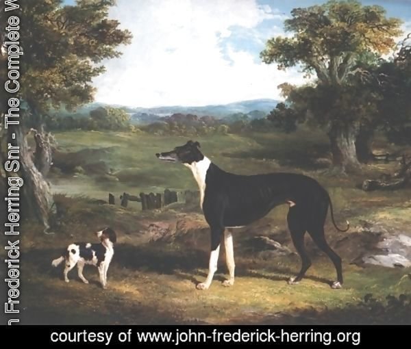 Greyhound and Dog In Landscape