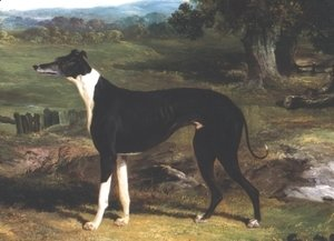 John Frederick Herring Snr - Greyhound