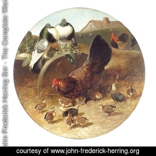 John Frederick Herring Snr - Hen With Chicks and Pigeons
