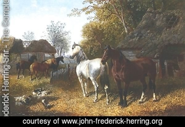 Horses and Ducks In Farmyard