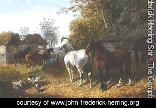 John Frederick Herring Snr - Horses and Ducks In Farmyard