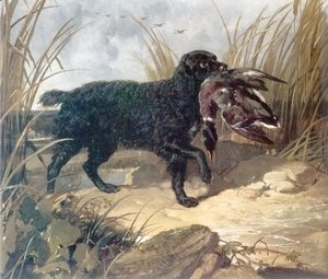 John Frederick Herring Snr - Irish Water Spaniel Retrieving a Duck