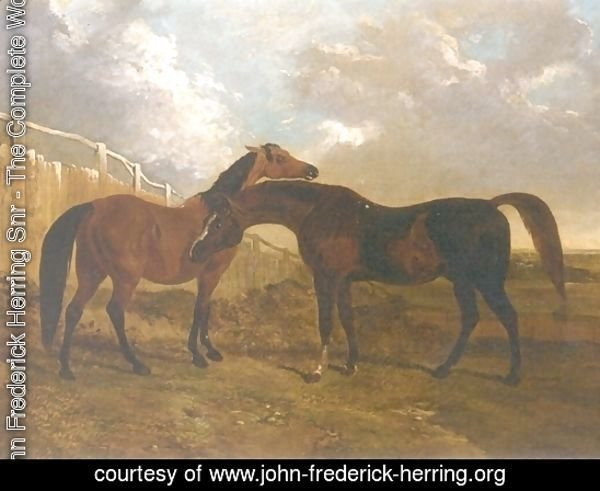 Languish and Pantaloon Two Horses in Landscape