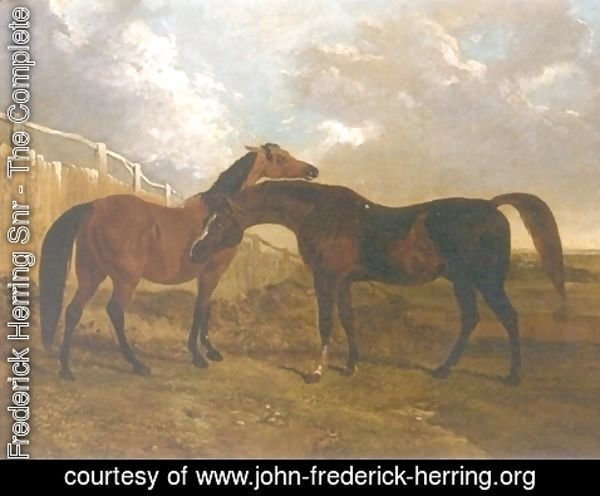 John Frederick Herring Snr - Languish and Pantaloon Two Horses in Landscape