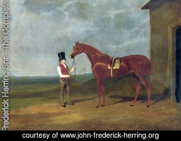 Mountaineer A Chestnut Colt 1826